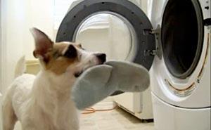 Hunden gör allt hemma. Bild från video