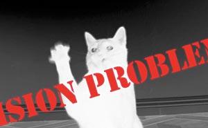 Kontaktlinser till katten. Bild från video