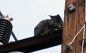 Katten som tog det osäkra före det säkra. Bild från video